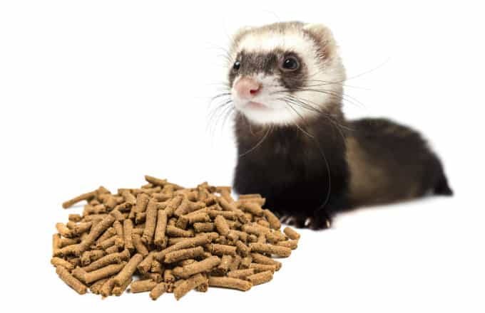 A ferret looking at some food pellets