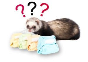 ferret and some diapers