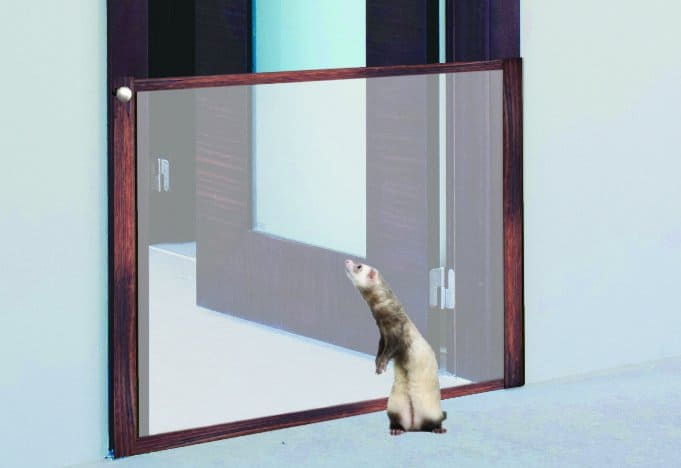 ferret gate blocking entrance