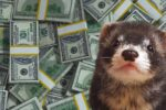 How Much Does a Ferret Cost? (Upfront, Monthly and Yearly Costs)
