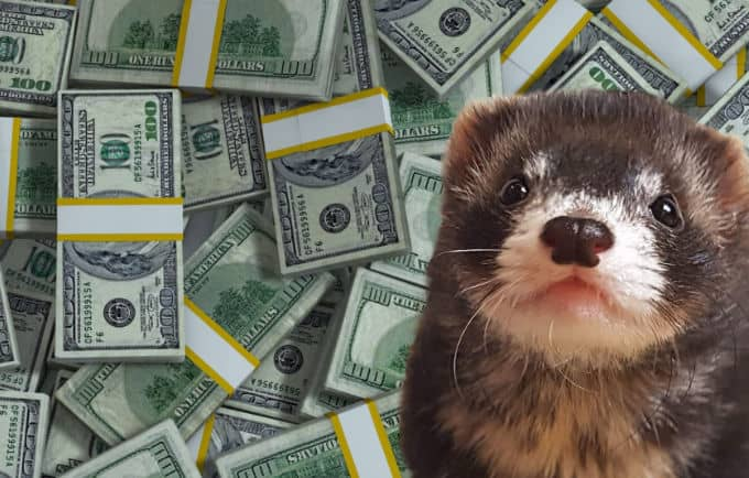 how much a ferret costs upfront, monthly and yearly