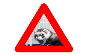 Warning sign of a ferret hissing